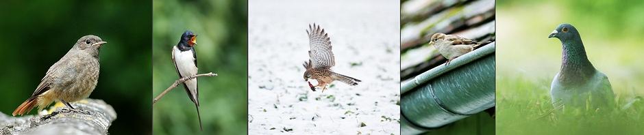 Ptaki – opisy gatunków